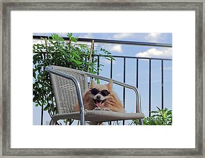Dog In Summer Framed Print by Charline Xia