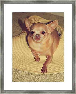 Dog In The Hat Framed Print by Laurie Search