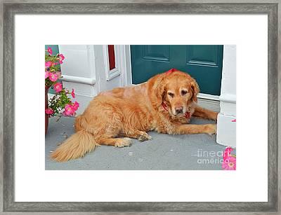Dog In Waiting Framed Print by Eva Kaufman