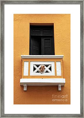 Dog Framed Print by John Rizzuto