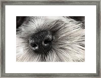 Dog Nose  Framed Print by Stephanie Frey