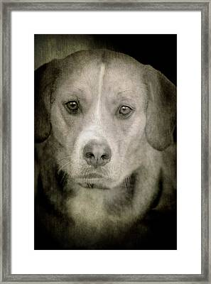 Dog Posing Framed Print by Loriental Photography