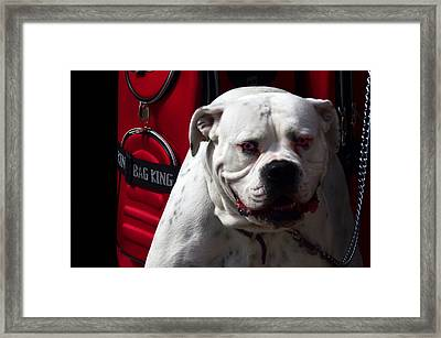 Dog Power Framed Print by Camille Lopez