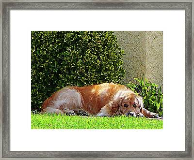 Dog Relaxing Framed Print by Susan Savad