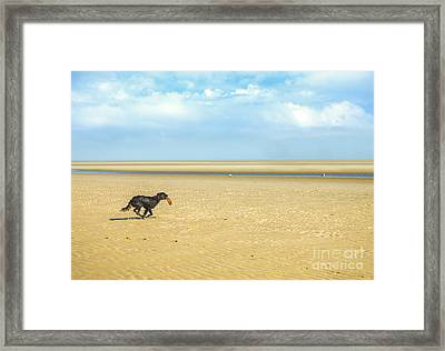 Dog Running On A Beach Framed Print by Diane Diederich