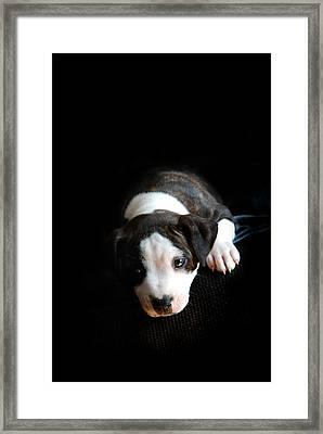 Dog-tired Framed Print by Mark Rogan