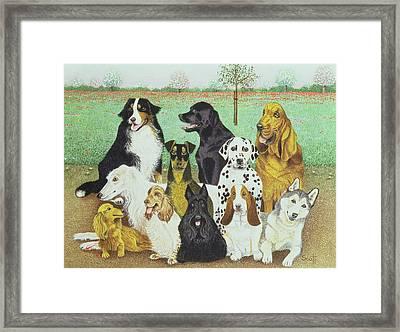 Dog Watch Framed Print by Pat Scott
