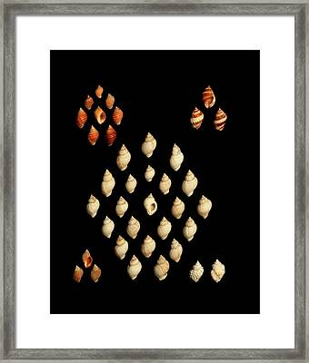 Dog Whelk Shells Framed Print by Gilles Mermet