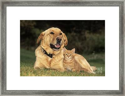 Dog With Kitten Framed Print by Rolf Kopfle
