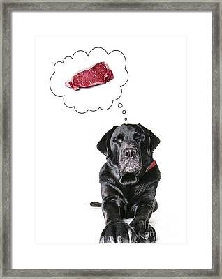 Doggie Dreams Framed Print by Diane Diederich
