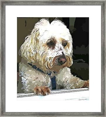 Doggie In The Window Framed Print by Judy Palkimas