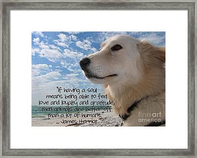 Doggie Soul Framed Print by Peggy J Hughes