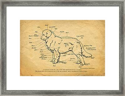 Doggy Diagram Framed Print by Tom Mc Nemar