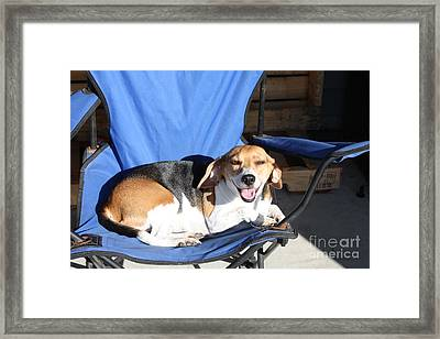 Dogs Days Of Summer Framed Print by John Telfer
