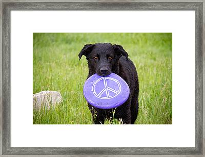 Dogs For Peace Framed Print by James BO  Insogna