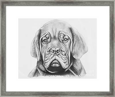 Dogue De Bordeaux Dog Framed Print by Lena Auxier