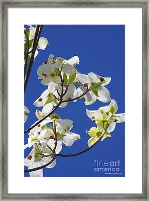Dogwood Beauty Framed Print by Tannis  Baldwin