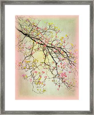 Dogwood Canvas 4 Framed Print by Jessica Jenney