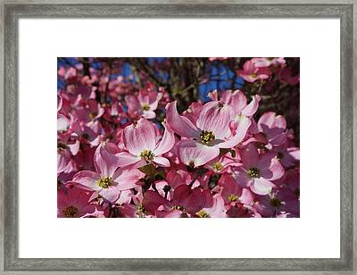 Dogwood Tree Flowers Art Prints Floral Framed Print by Baslee Troutman