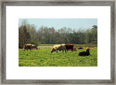 Doin What Comes Naturally Framed Print by Suzanne Gaff