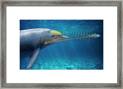 Dolphin Echolocation Framed Print by Claus Lunau