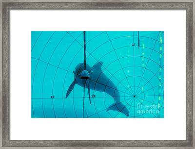 Dolphin Experiment Framed Print by James L. Amos
