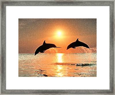 Dolphin Golden Sunset Framed Print by Cadence Spalding
