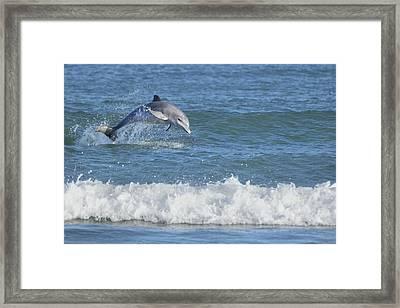 Dolphin In Surf Framed Print by Bradford Martin