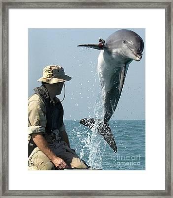 Dolphin Framed Print by Paul Fearn