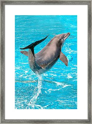 Dolphin Plays Framed Print by Michal Bednarek