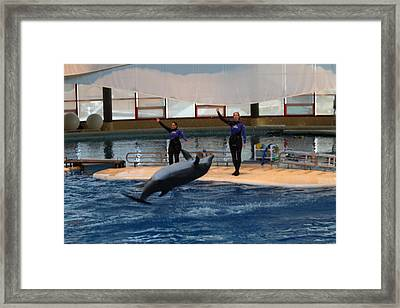 Dolphin Show - National Aquarium In Baltimore Md - 1212139 Framed Print by DC Photographer