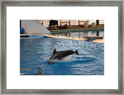 Dolphin Show - National Aquarium In Baltimore Md - 1212163 Framed Print by DC Photographer