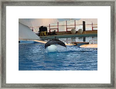 Dolphin Show - National Aquarium In Baltimore Md - 1212171 Framed Print by DC Photographer
