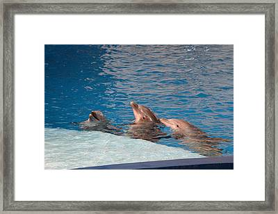 Dolphin Show - National Aquarium In Baltimore Md - 1212184 Framed Print by DC Photographer