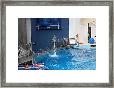 Dolphin Show - National Aquarium In Baltimore Md - 1212200 Framed Print by DC Photographer