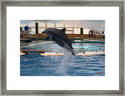 Dolphin Show - National Aquarium In Baltimore Md - 1212248 Framed Print by DC Photographer