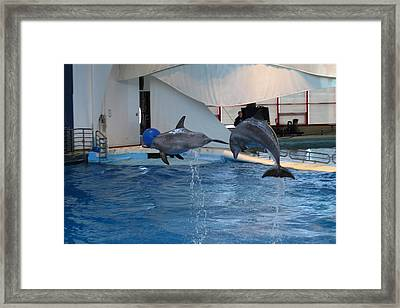 Dolphin Show - National Aquarium In Baltimore Md - 1212258 Framed Print by DC Photographer