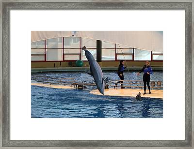 Dolphin Show - National Aquarium In Baltimore Md - 121226 Framed Print by DC Photographer