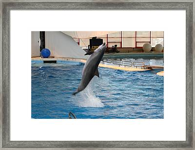 Dolphin Show - National Aquarium In Baltimore Md - 1212263 Framed Print by DC Photographer