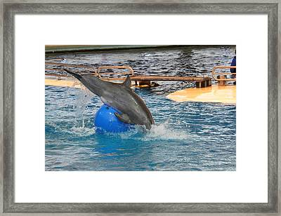 Dolphin Show - National Aquarium In Baltimore Md - 121242 Framed Print by DC Photographer