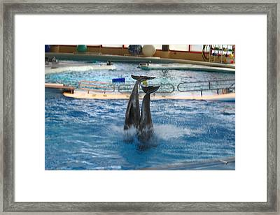 Dolphin Show - National Aquarium In Baltimore Md - 121281 Framed Print by DC Photographer
