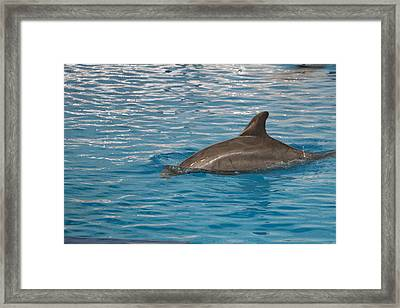 Dolphin Show - National Aquarium In Baltimore Md - 12129 Framed Print by DC Photographer
