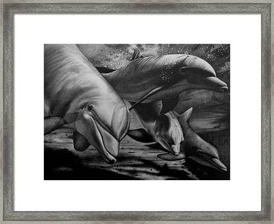 Dolphins Framed Print by Jerry Winick