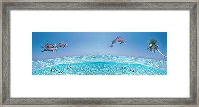 Dolphins Leaping In Air Framed Print by Panoramic Images