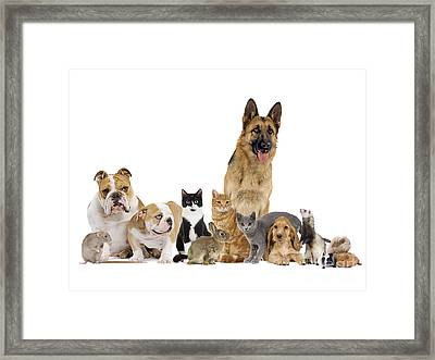 Domestic Mammal Pets Framed Print by Jean-Michel Labat