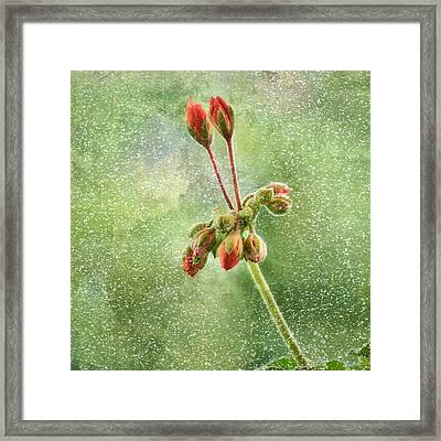 Domination-textured Framed Print by Gynt