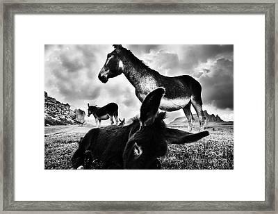 Donkey Family Framed Print by Yuri Santin
