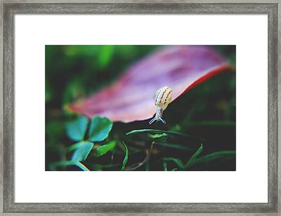 Don't Stop Reaching Framed Print by Laurie Search