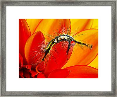 Don't Touch Framed Print by Bill Caldwell -        ABeautifulSky Photography