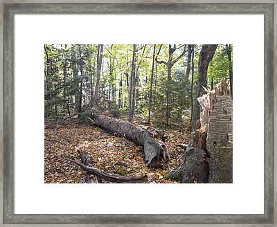 Door Bluff Headlands Cp Fallen Tree Framed Print by Jim Baker